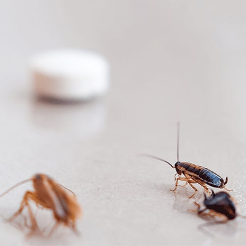 pest control for cockroaches