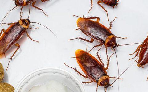 prevent cockroach problem